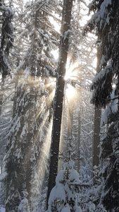 Farbphoto von Friedrich Rothwangl: Wald im Schnee
